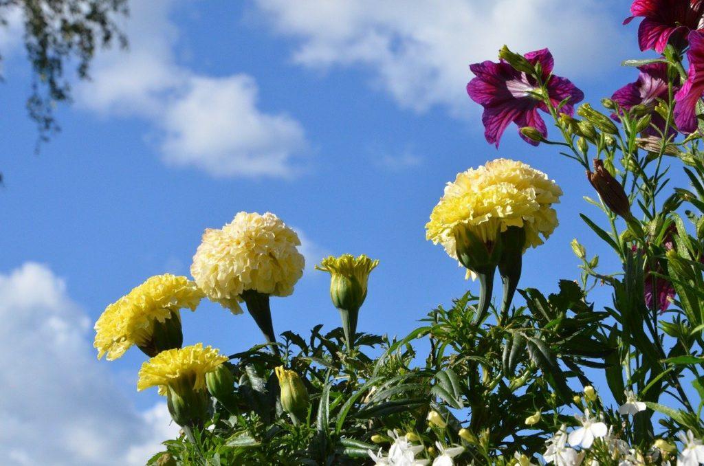 summer, flowers, nature-4097876.jpg